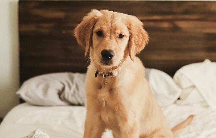 Consejos para Dog Lovers que viven en                departamentos