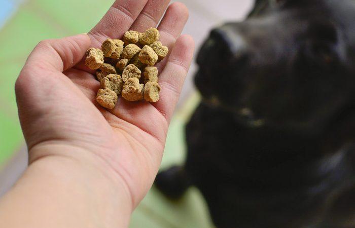 Cómo alimentar a tu perro de manera saludable
