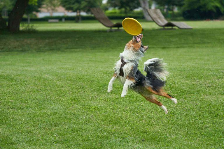 Día Mundial del Perro Adoptado: Consejos de educación